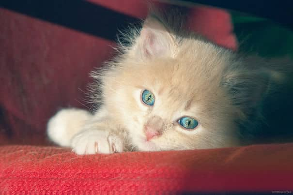593136dc8cc3b_kEtMmk8__605 20 Foto Lucunya Saat Kucing Bermain dengan Sinar Matahari Ini Bakal Mencerahkan Harimu