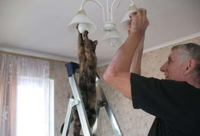 5934f8bac5e32_hUwJe__700 Lagi Bete? 20 Foto Tingkah Kucing yang Lucu dan Gak Biasa Ini bisa Bikin Kamu Ketawa Seketika