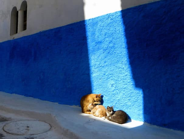 593668c2bb621_8154897754_75d4a8109a_b__605 20 Foto Lucunya Saat Kucing Bermain dengan Sinar Matahari Ini Bakal Mencerahkan Harimu