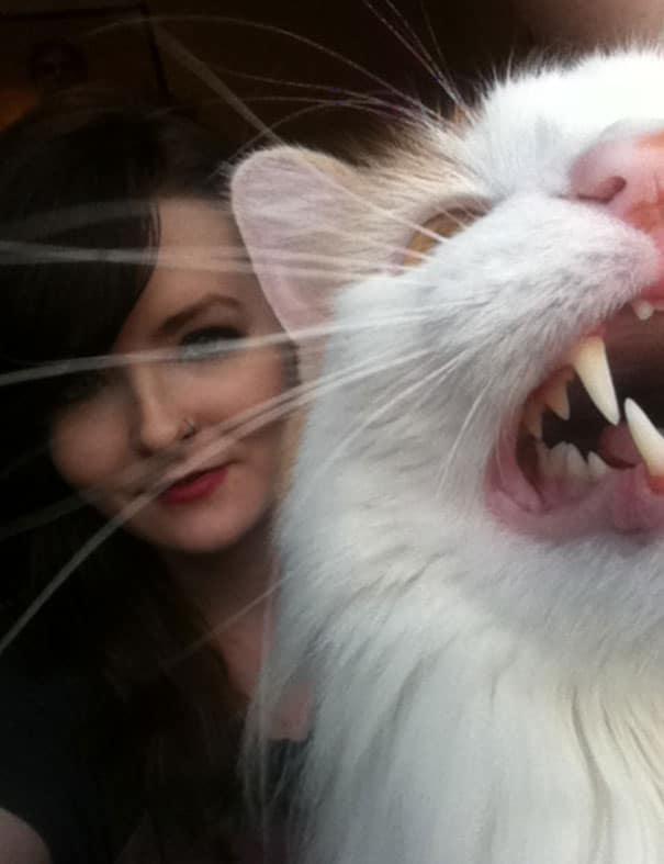 animals-dogs-cats-dont-want-to-be-photographed-113-598c47db2642c__605 Diajak Selfie, 16 Kucing Ini Malah Bikin Tingkah yang Sukses Bikin Kamu Ketawa