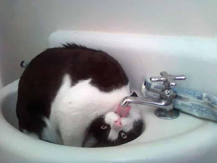 cat-drinking-water-5939468464d24__700 Lagi Bete? 20 Foto Tingkah Kucing yang Lucu dan Gak Biasa Ini bisa Bikin Kamu Ketawa Seketika