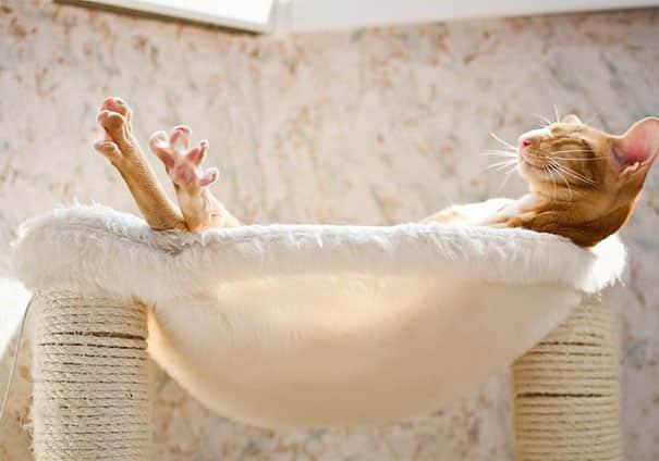 cats-worshiping-sun-201-593555ca6bad9__605 20 Foto Lucunya Saat Kucing Bermain dengan Sinar Matahari Ini Bakal Mencerahkan Harimu