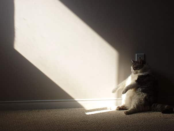 cats-worshiping-sun-37-5936590a06309__605 20 Foto Lucunya Saat Kucing Bermain dengan Sinar Matahari Ini Bakal Mencerahkan Harimu