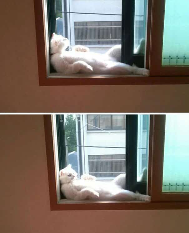cats-worshiping-sun-39-593662e9d2beb__605 20 Foto Lucunya Saat Kucing Bermain dengan Sinar Matahari Ini Bakal Mencerahkan Harimu