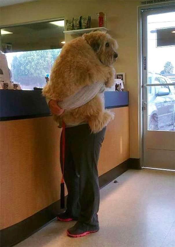 dogs-scared-of-things-42-591aa1b6021fc__605 Bukannya Kasihan, 11 Ekspresi Anjing Saat Mengalami Phobia Ini Malah Bikin Ketawa