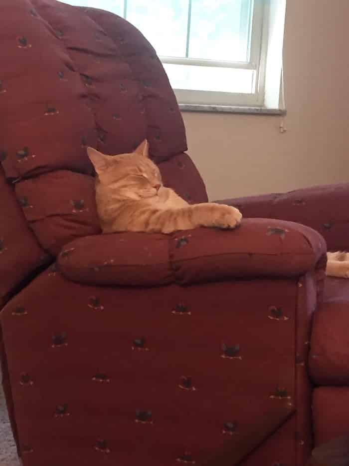 hey-pandas-share-pics-of-your-cat-acting-weird-103-593148056e51e__700 Lagi Bete? 20 Foto Tingkah Kucing yang Lucu dan Gak Biasa Ini bisa Bikin Kamu Ketawa Seketika