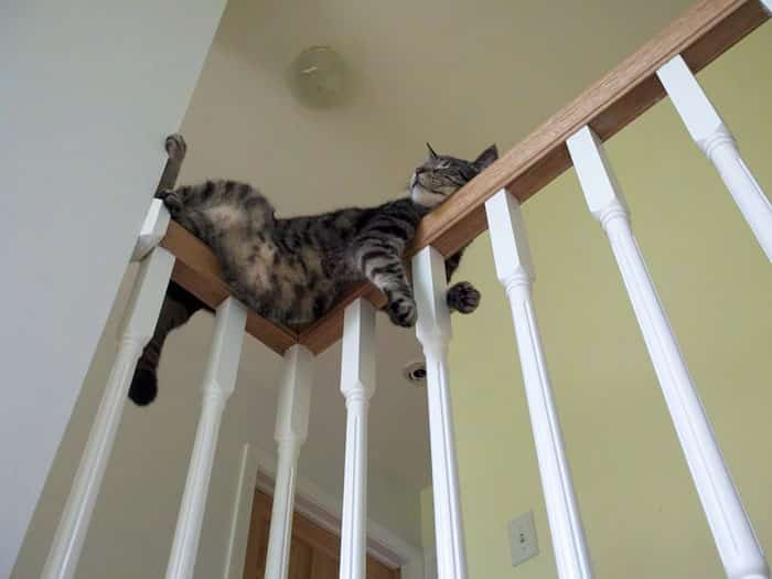hey-pandas-share-pics-of-your-cat-acting-weird-108-5934fdc823033__700 Lagi Bete? 20 Foto Tingkah Kucing yang Lucu dan Gak Biasa Ini bisa Bikin Kamu Ketawa Seketika