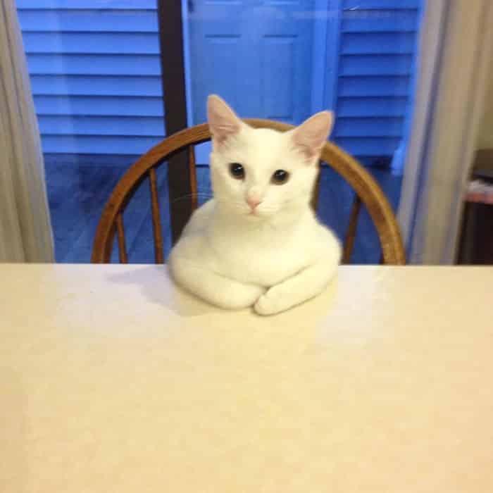hey-pandas-share-pics-of-your-cat-acting-weird-144-59354e4423211__700 Lagi Bete? 20 Foto Tingkah Kucing yang Lucu dan Gak Biasa Ini bisa Bikin Kamu Ketawa Seketika