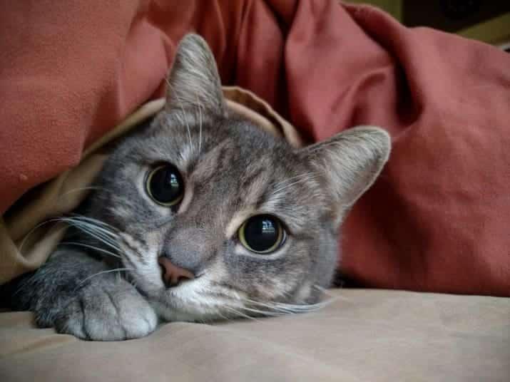 original-27971-1424797397-3 Ini Dia 7 Cara Kucing Berkomunikasi Dengan Tuannya, Mana Yang Paling Sering Ditunjukkan Kucing Peliharaanmu?